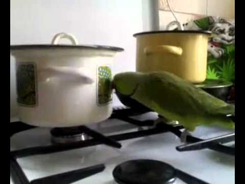 Green Parrot Food Green Parrot Asks For Food to