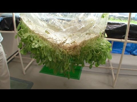 Growing Plants on Thin Films #DigInfo