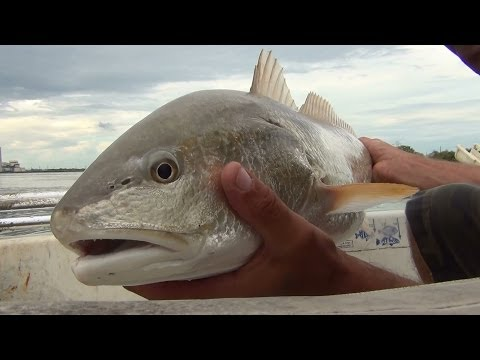 Calaveras Lake RedFish, Fishing The Beach