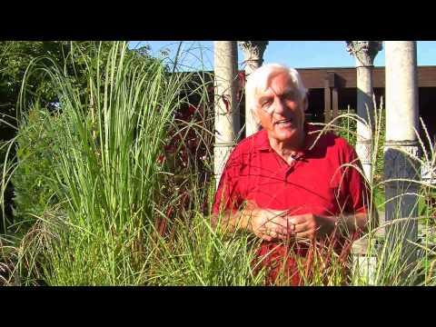 VOL.AT-Gartentipp: Gräser Für Garten Und Balkon