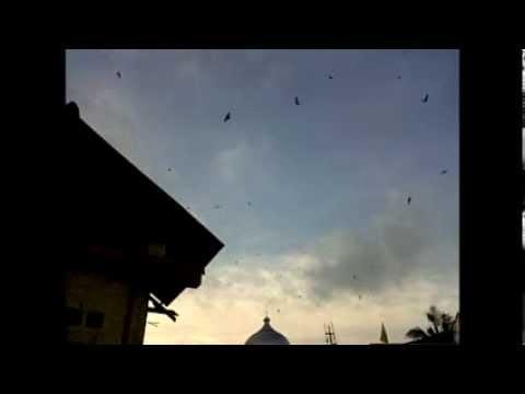 TEST SUARA WALET TEMBAKAN BASOKA BY: KANG MAS KELOD