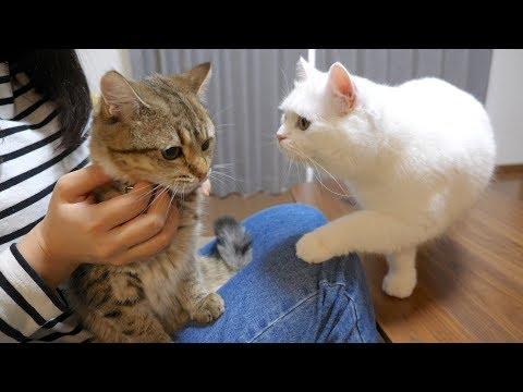 初めて首輪をする子猫が心配でたまらない先輩猫!
