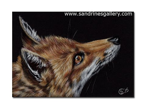 Fox Pencil Drawing How to Draw a Fox on Black