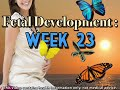 Fetal Development Week 23 (Pregnancy Health Guru)
