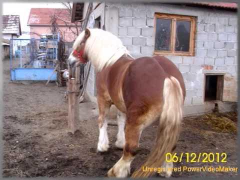 Caii lui Luci Sabolciu