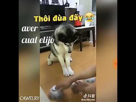 Nunca se les hace hezo a sus mascotas :) - jfmm