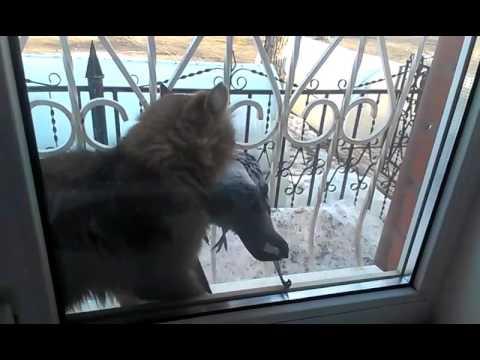 Кошак добытчик (все в дом)