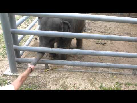 Elephant Crocodile Tug of War Elephant Loves Tug of War