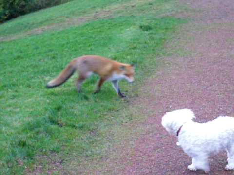 Spike meets Fox