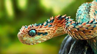 5 Most Rare Animals In The World.[HINDI]