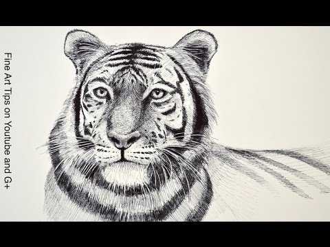Drawing a Tiger  With Markers - Time Lapse