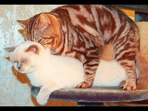 Вязанные трусы для кошек.