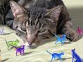 Stray Cat Strut by The Stray Cats
