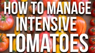 HOW TO: Manage Intensive Tomatoes