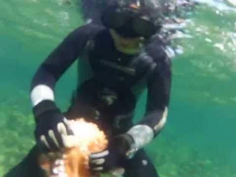 Pêche aux poulpes en chasse sous-marine