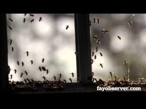What happens when 10,000 honeybees invade your house?