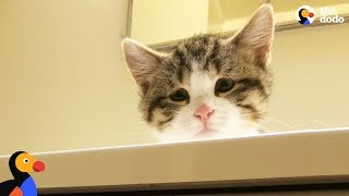 Sad Looking Cat Is So Happy To Be Part Of A Family | The Dodo