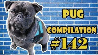 Pug Compilation 142 - Funny Dogs but only Pug Videos | Instapug