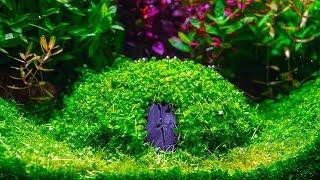 Planted Aquarium | How to Create | Hobbit House