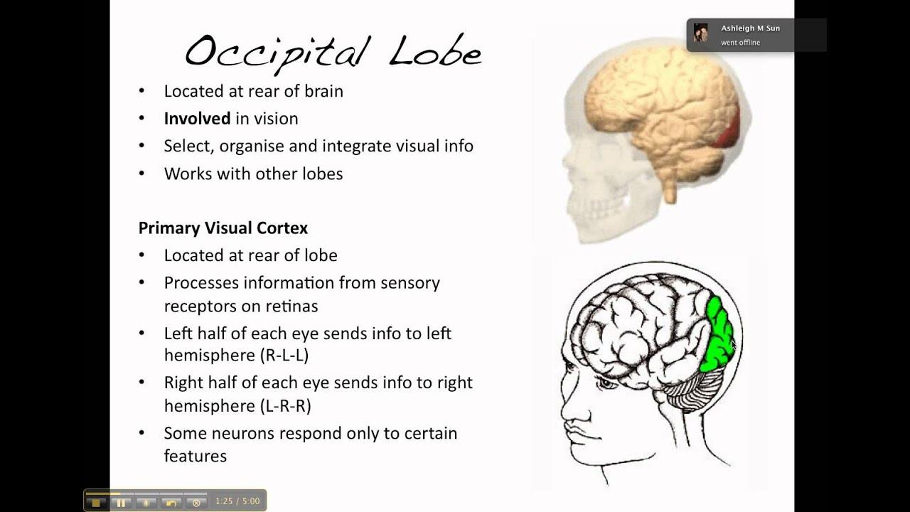 lobe wonder how to use