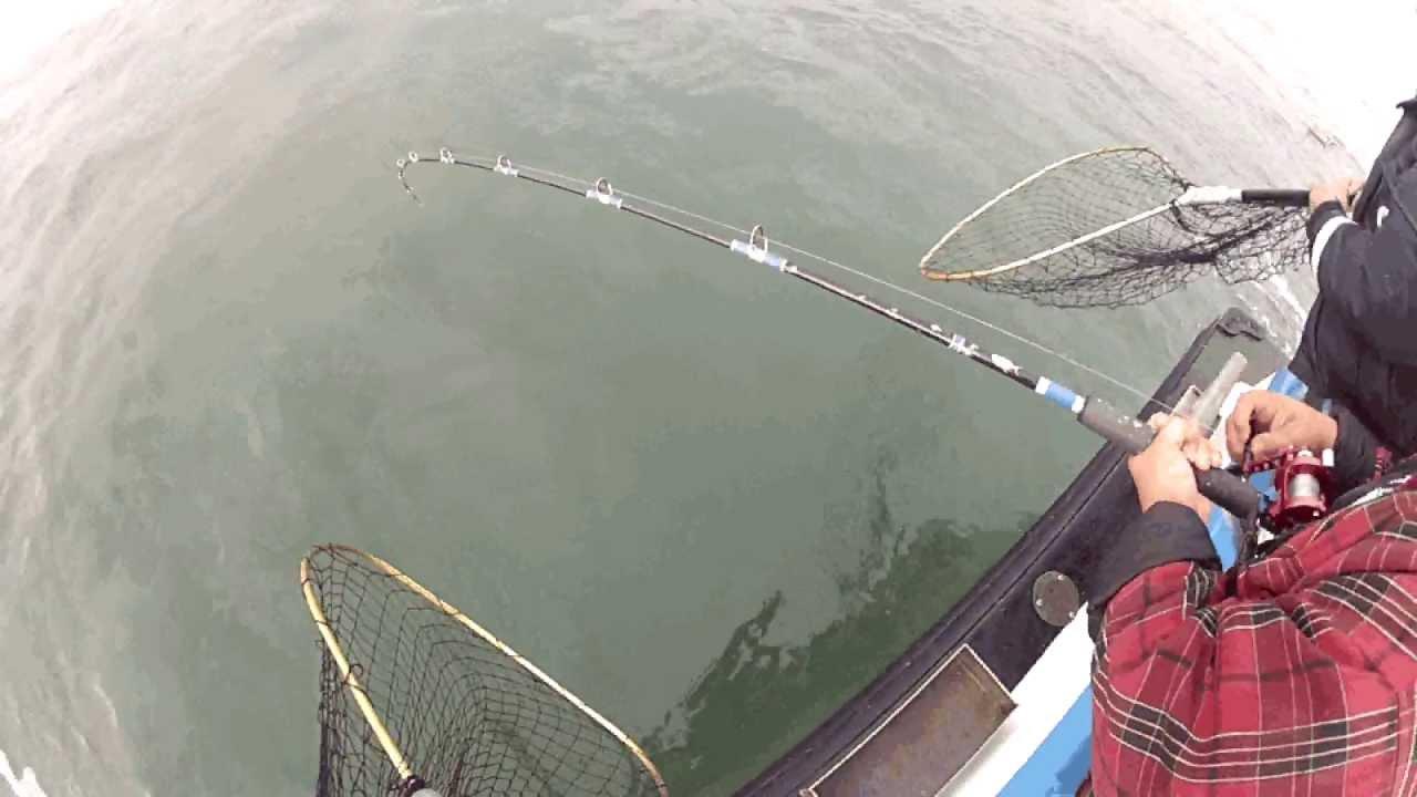Halibut on flash san francisco bay sportfishing 39 s boat for Sf bay halibut fishing