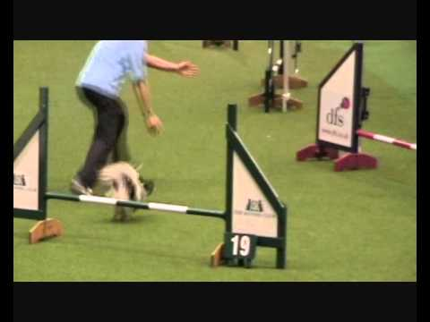 Caeyn @ Crufts 2011 Small Team agility