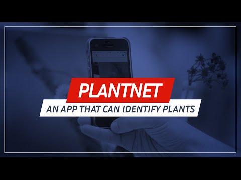 Una app permite identificar las plantas con solo tomar una foto