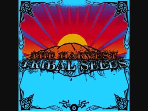 Tribal Seeds - Libertad