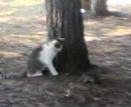 hayvanlar alemi (kedi fare kavgası)