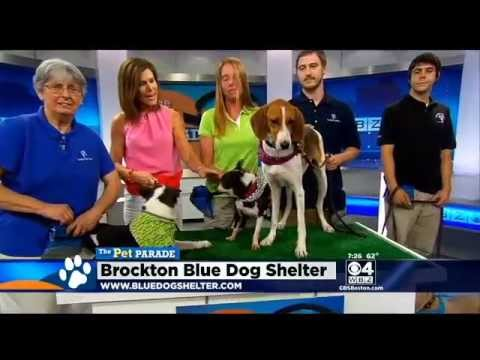Pet Parade: Brockton Blue Dog Shelter video