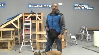 Cali K9® Socialization - Bay Area Dog Training - Dog Training Videos