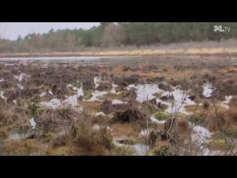 Les lagunes, une responsabilité partagée