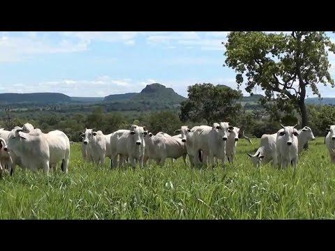 Clique e veja o vídeo Curso Engorda a Pasto