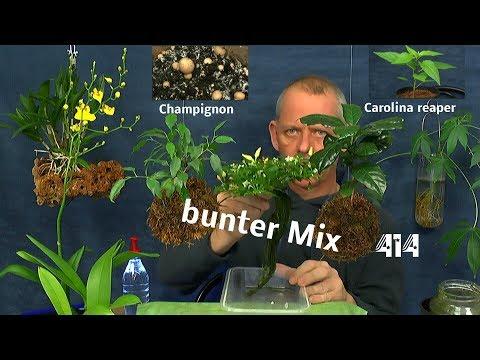 Exotische Pflanzen Anzucht im Haus einige Updates