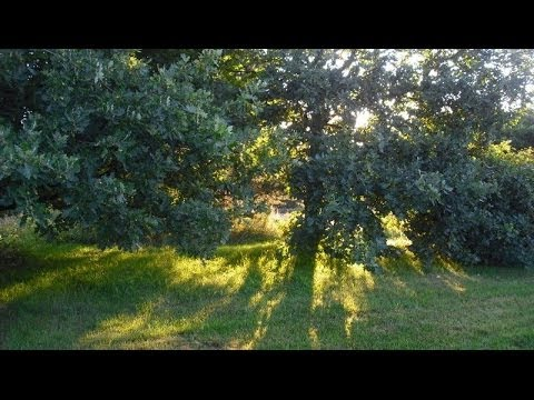 Hours natural sounds morning birds singing no music youtube