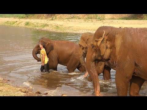 Rescued Baby Elephant Falls In Love With A Man