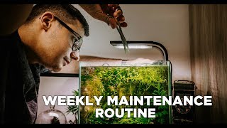 Nano aquariums WEEKLY MAINTENANCE ROUTINE - My 4 beautiful nano tanks