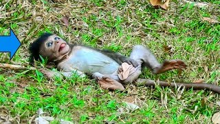 Ah! What Baby Donny Doing On Ground ?| What Are These Baby Monkeys Doing With Wonderful Activities