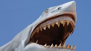 BADASS SHARK!