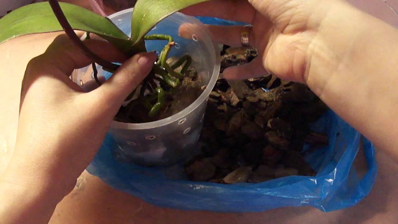Как орхидея сажать 20