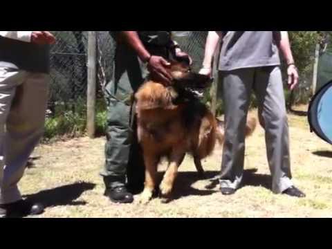 Tafelberg kry nuwe hondehelpers MP3