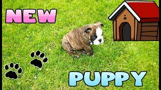 MEET LITTLE CARLY NEW PUPPY!! Kelly and Carly Vlogs.