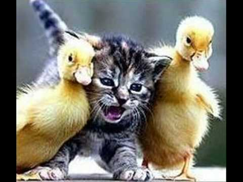 Lustige Guten Morgen Bilder Mit Tieren