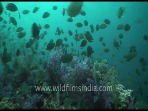 Underwater swimming over Coral