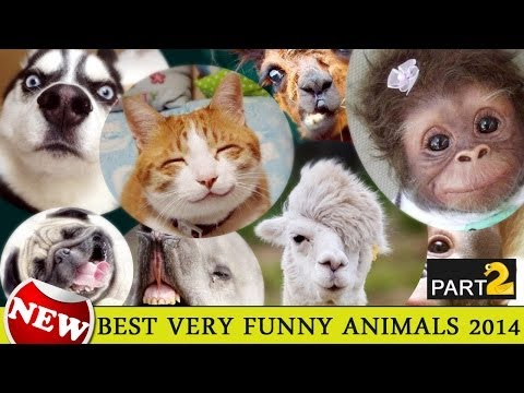 VERY FUNNY!!! Bad Lip Reading with Animals  YouTube