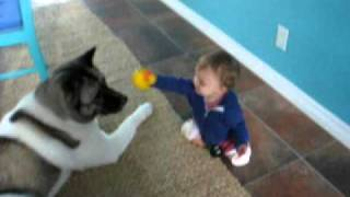 AKITA & baby playing