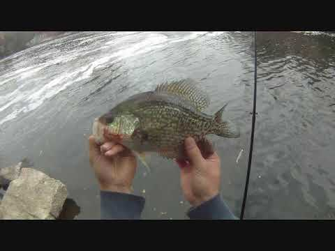 The GEO Report: November 8, 2012 Chicago River Skokie Illinois Fall Crappie Fishing