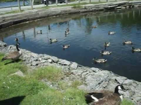 Rockwood Park; Duck Pond 004.avi