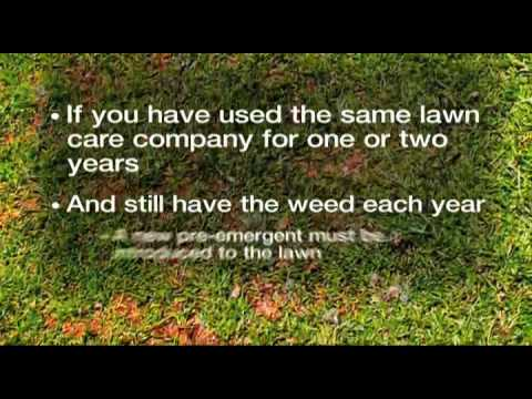 Norcross Lawn Care- Weed Pro: Poa Annua Control