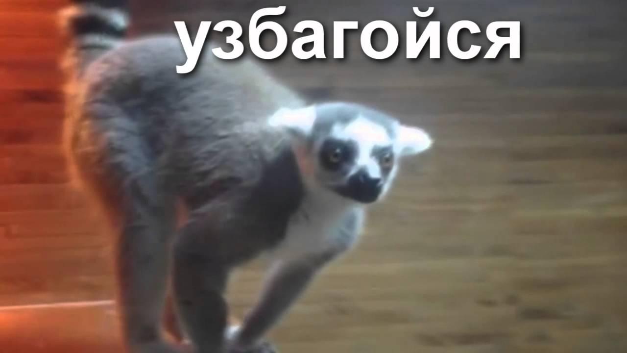 вк гифки: